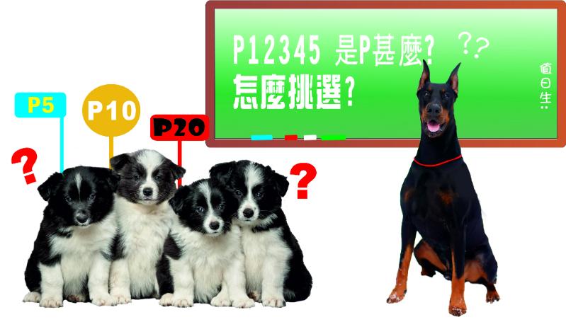 尺寸P是什麼?怎麼挑選?